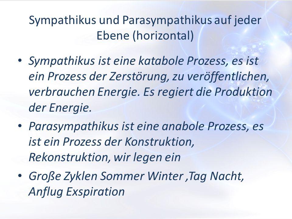 Sympathikus und Parasympathikus auf jeder Ebene (horizontal) Sympathikus ist eine katabole Prozess, es ist ein Prozess der Zerstörung, zu veröffentlichen, verbrauchen Energie.