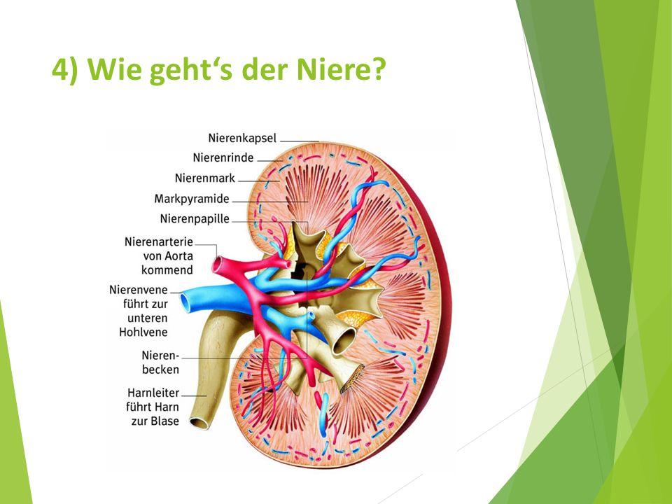 4) Wie geht's der Niere?