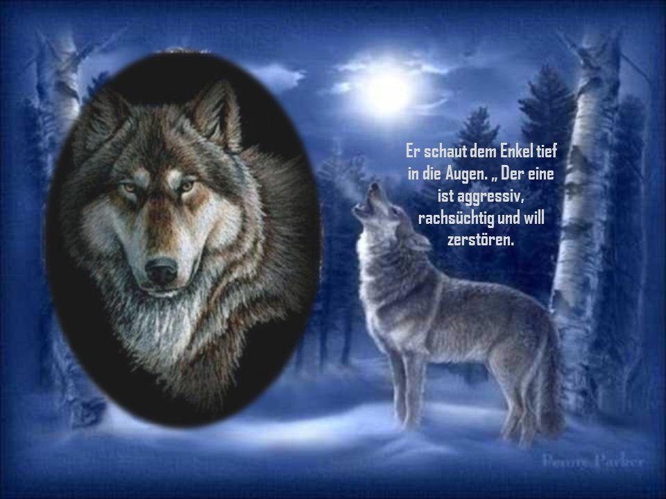 """""""Manchmal sagte der Großvater nach einer Weile, """"manchmal fühle ich mich als würden zwei Wölfe in meiner Brust mit einander kämpfen ."""