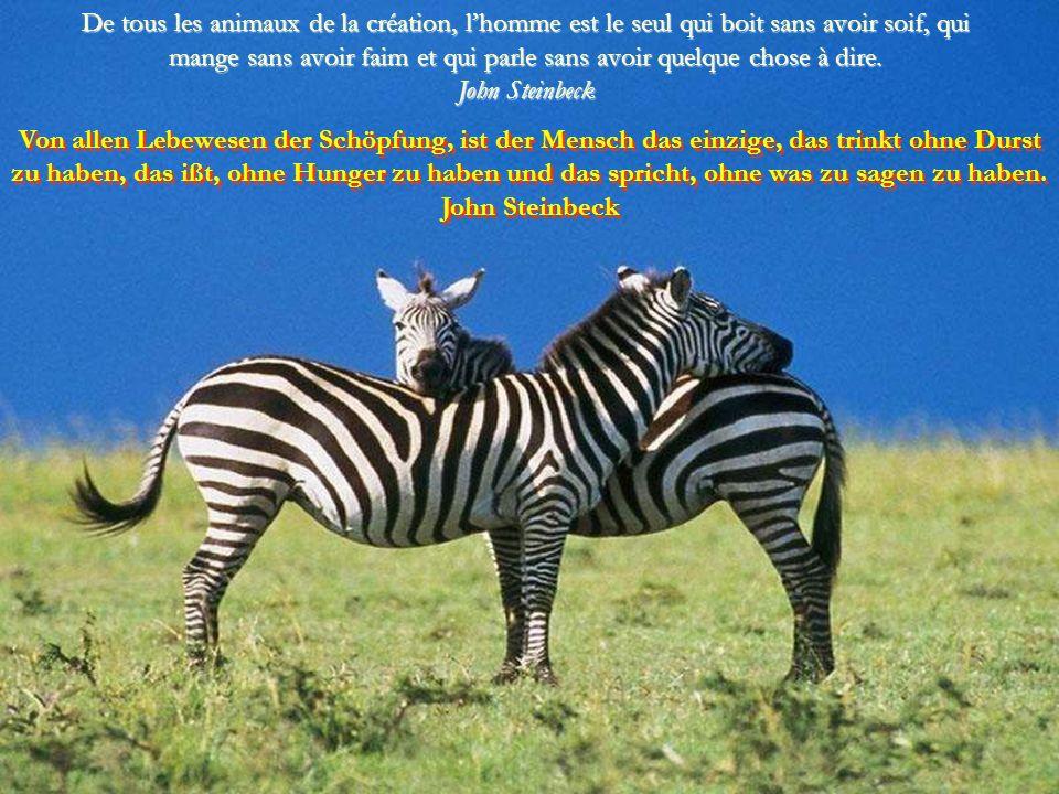 Les animaux sont de très bons amis. Ils ne posent pas de questions et ils ne donnent pas de critiques. George Elliot Die Tiere sind sehr gute Freunde.