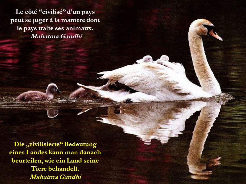L'homme, fragile être de la nature, était doté de deux choses qui feraient de lui le plus fort des animaux : la Raison et la Sociabilité.
