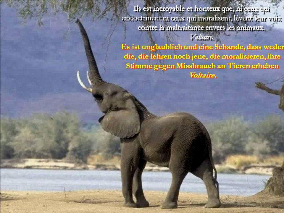Le jour viendra où des hommes comme moi considèreront l'assassinat d'un animal de la même manière qu'ils considèrent aujourd'hui l'assassinat d'un homme.