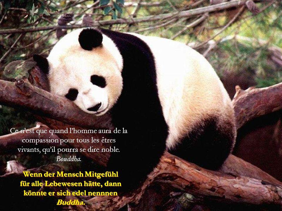 Ils est incroyable et honteux que, ni ceux qui ni ceux qui moralisent, lèvent leur voix contre la maltraitance envers les animaux. Ils est incroyable