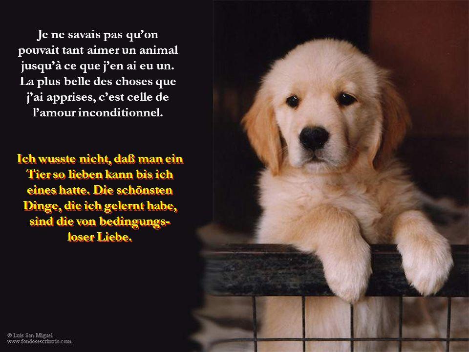 Le côté civilisé d'un pays peut se juger à la manière dont le pays traite ses animaux.