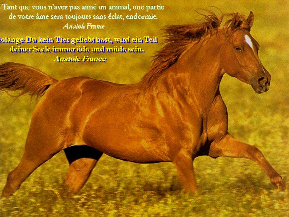 Ils est incroyable et honteux que, ni ceux qui ni ceux qui moralisent, lèvent leur voix contre la maltraitance envers les animaux.