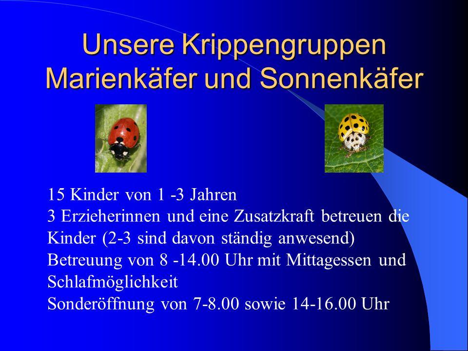 Unsere Krippengruppen Marienkäfer und Sonnenkäfer 15 Kinder von 1 -3 Jahren 3 Erzieherinnen und eine Zusatzkraft betreuen die Kinder (2-3 sind davon s