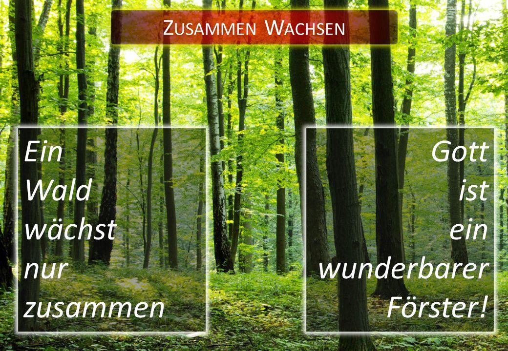 Z USAMMEN W ACHSEN Ein Wald wächst nur zusammen Gott ist ein wunderbarer Förster!
