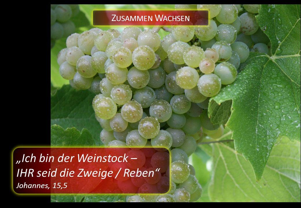 """Z USAMMEN W ACHSEN """"Ich bin der Weinstock – IHR seid die Zweige / Reben Johannes, 15,5 """"Ich bin der Weinstock – IHR seid die Zweige / Reben Johannes, 15,5"""