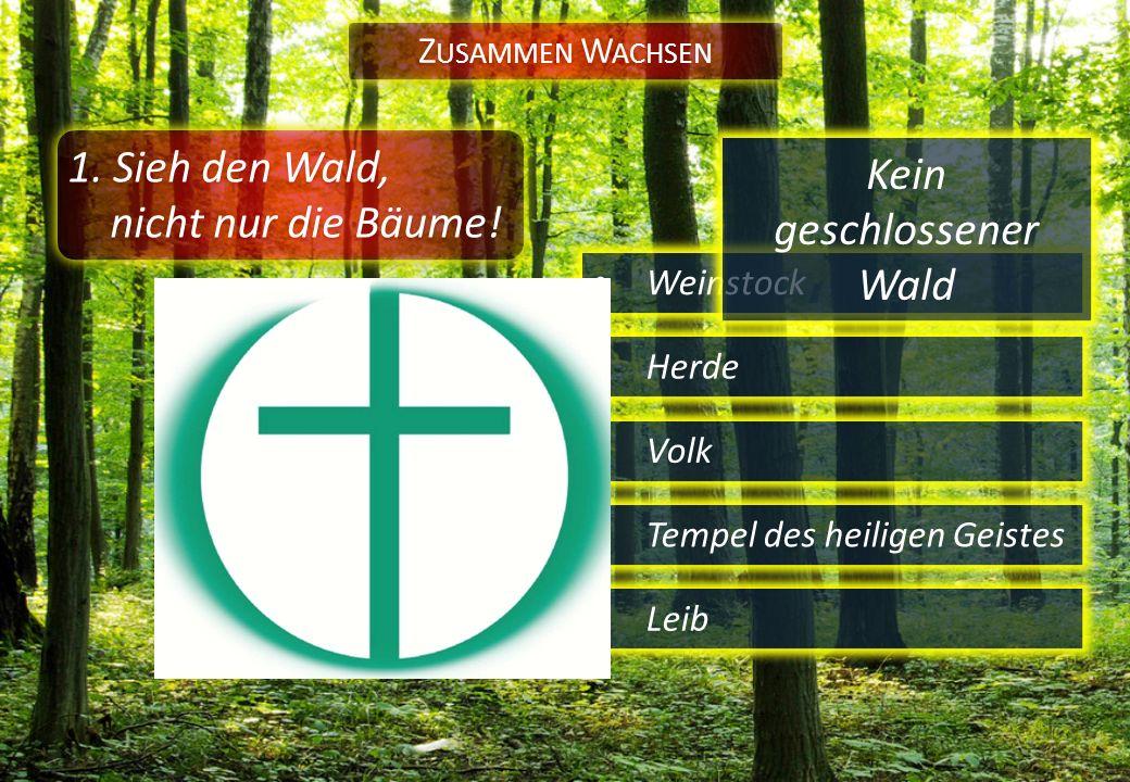 1. Sieh den Wald, nicht nur die Bäume! Weinstock Z USAMMEN W ACHSEN Herde Volk Tempel des heiligen Geistes Leib Kein geschlossener Wald