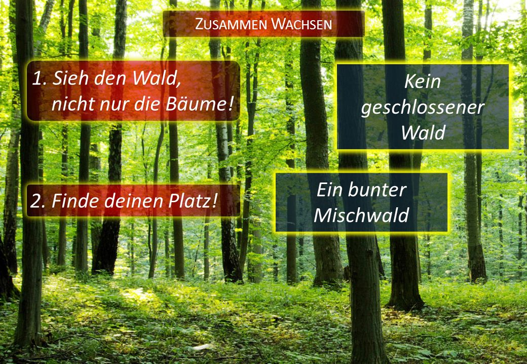 1. Sieh den Wald, nicht nur die Bäume! Z USAMMEN W ACHSEN 2. Finde deinen Platz! Ein bunter Mischwald Kein geschlossener Wald