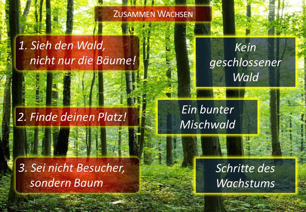 1. Sieh den Wald, nicht nur die Bäume! Z USAMMEN W ACHSEN 2. Finde deinen Platz! Ein bunter Mischwald Kein geschlossener Wald 3. Sei nicht Besucher, s