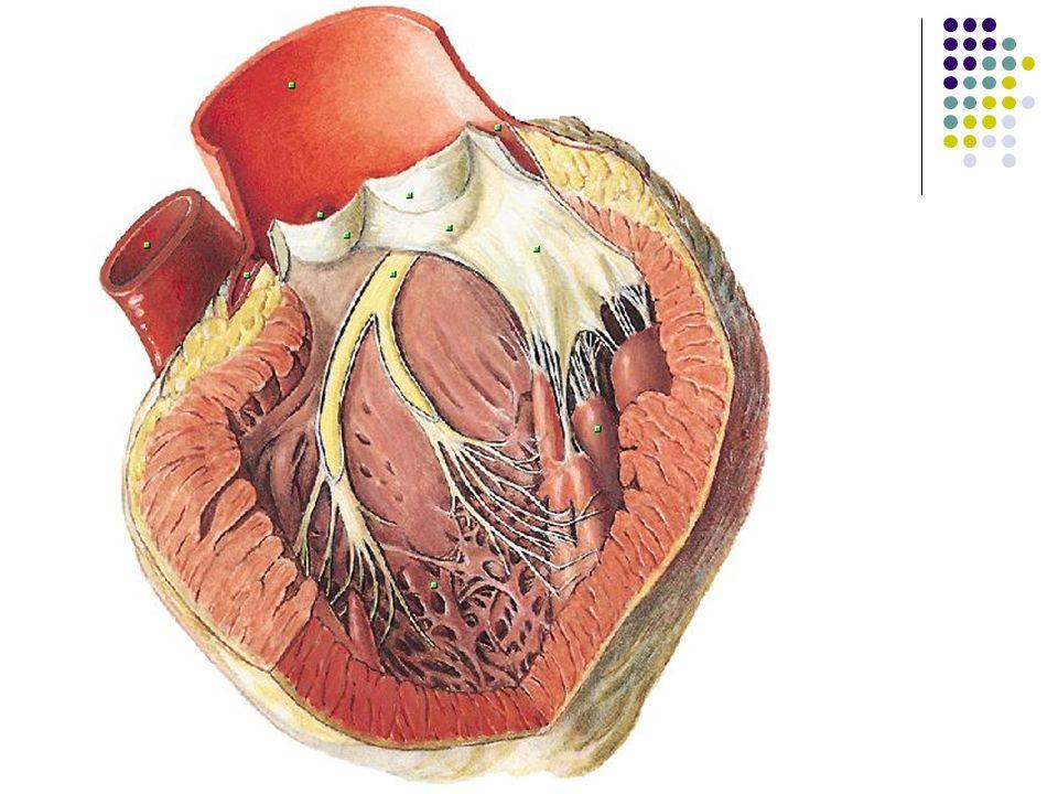 EKG für Arzthelferinnen