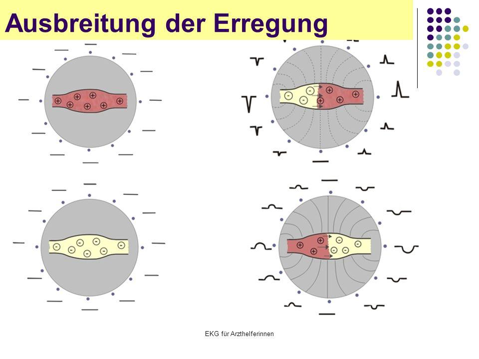 EKG für Arzthelferinnen Ausbreitung der Erregung