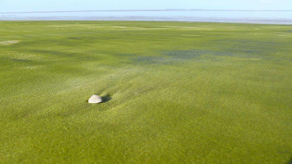 Una impresionante playa, con una atractiva arena de color verde verde.