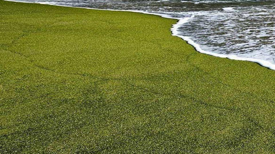 Die grüne Farbe des Sandes kommt von der Anwesenheit eines grünlichen Halbedelsteins,genannt Olivin, der aus dem Vulkankegel Pu u Mahana Hawaii kommt.