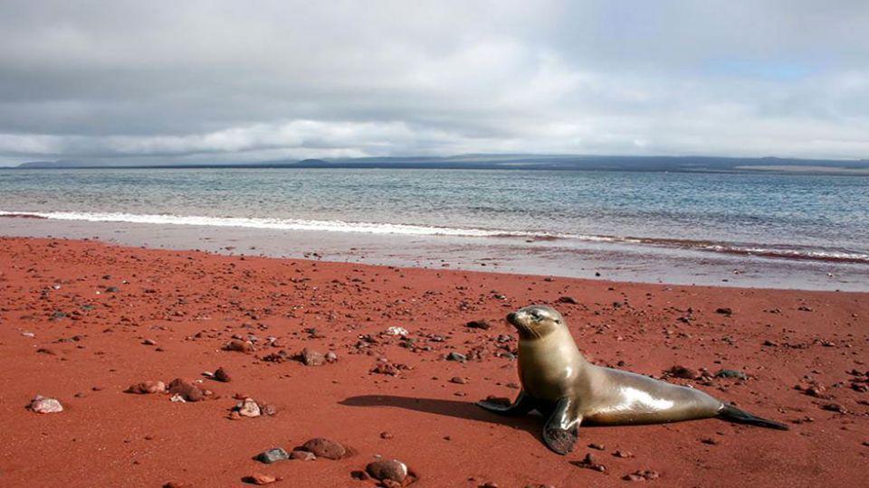 Red Sand am Strand von Rabida Insel wurde durch die Oxidation von Eisenreichem Vorkommen an Lava gebildet wurde, aber es könnte auch sein, dass diese