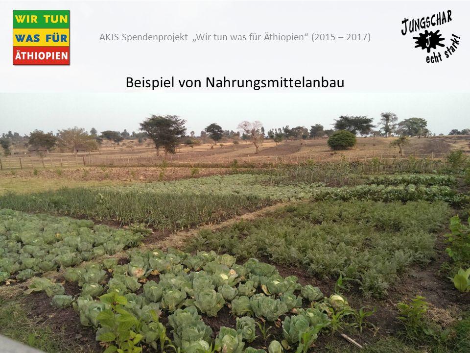 """Beispiel von Nahrungsmittelanbau AKJS-Spendenprojekt """"Wir tun was für Äthiopien (2015 – 2017)"""