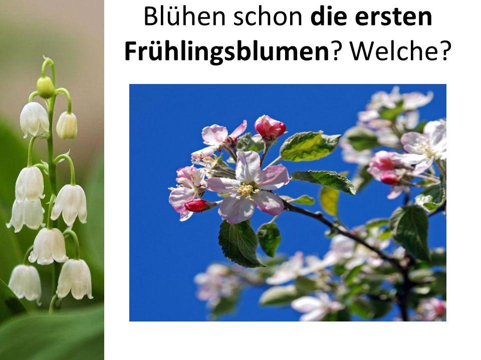 Blühen schon die ersten Frühlingsblumen? Welche?