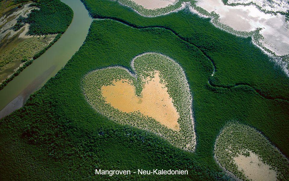 Mangroven - Neu-Kaledonien