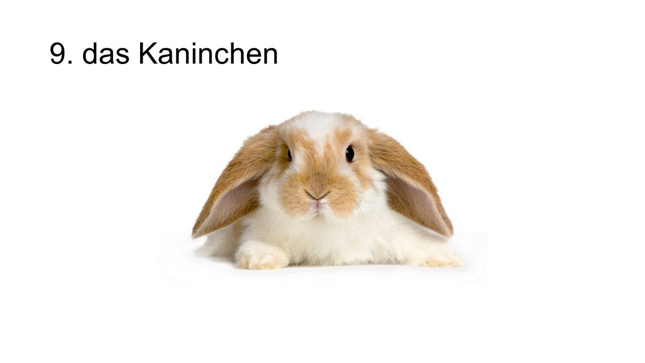 9. das Kaninchen