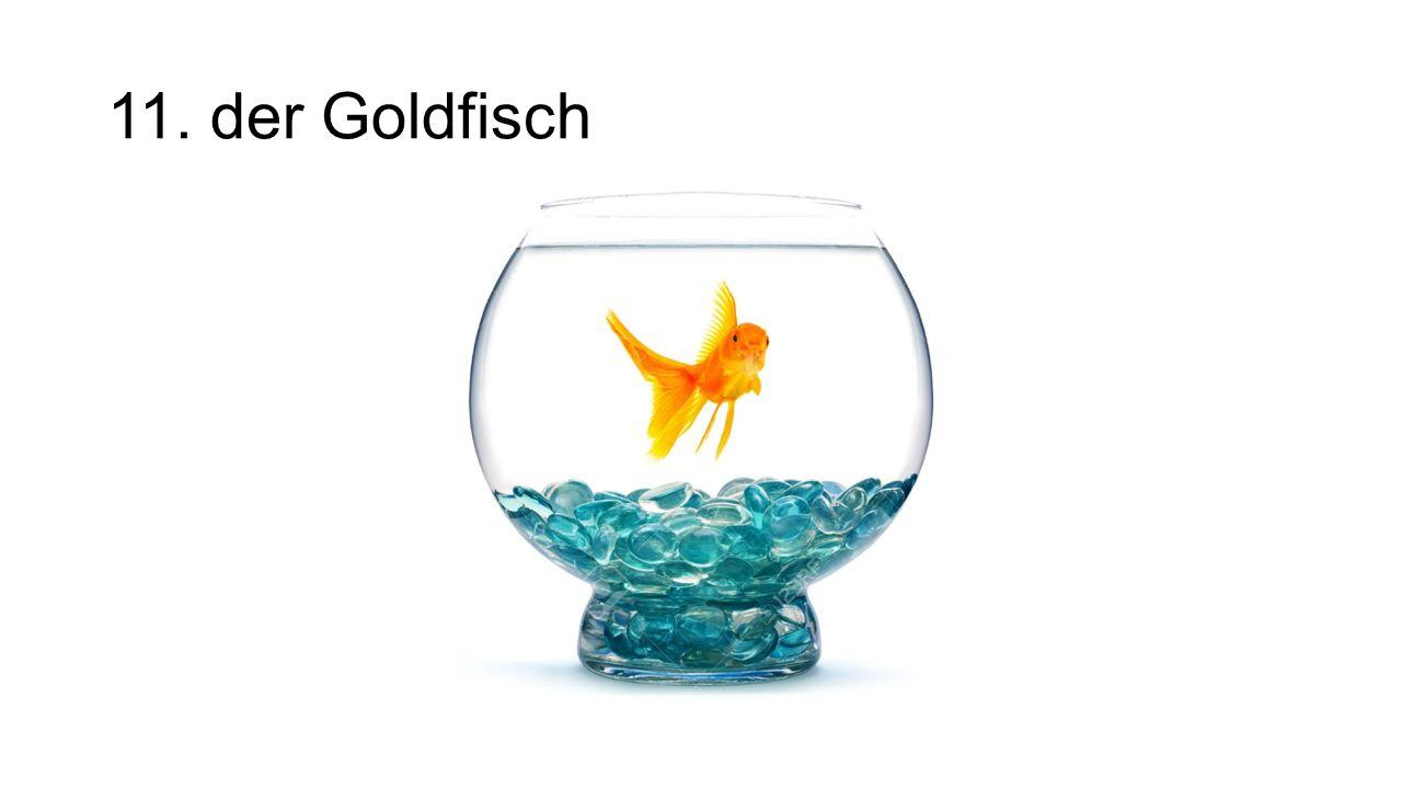 11. der Goldfisch