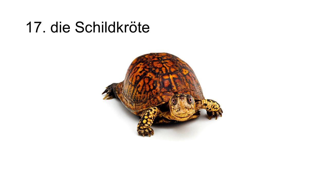 17. die Schildkröte