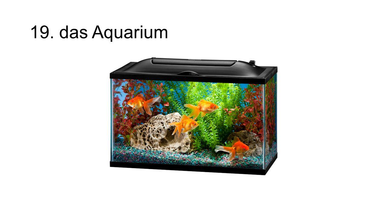 19. das Aquarium