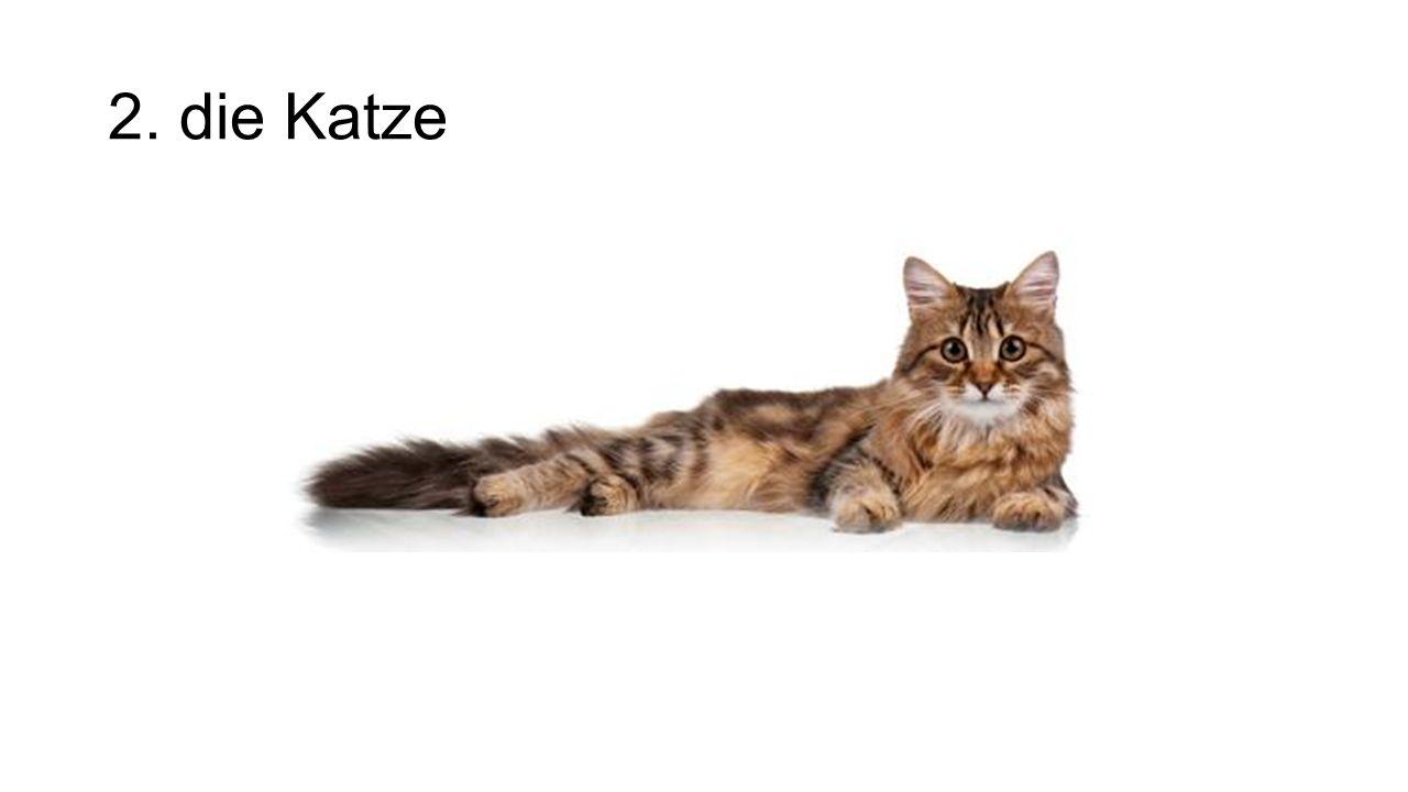2. die Katze