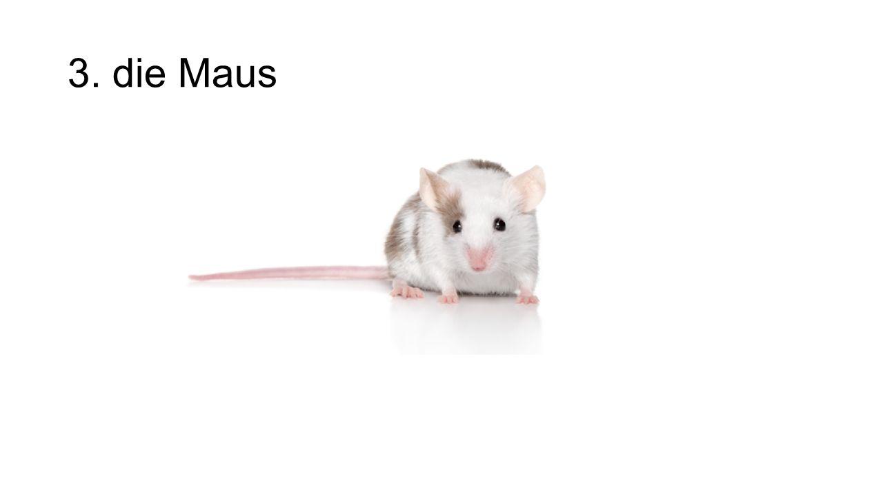 3. die Maus