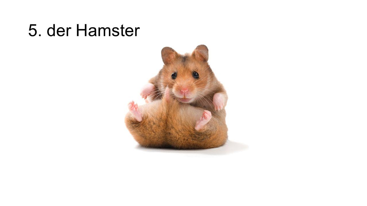 5. der Hamster