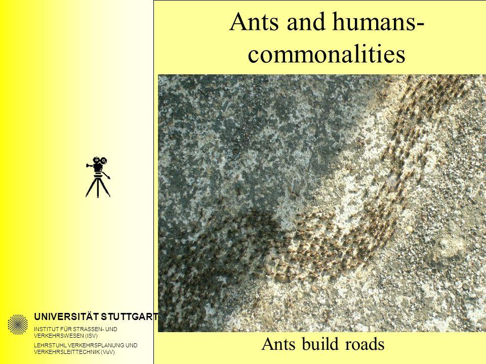 UNIVERSITÄT STUTTGART INSTITUT FÜR STRASSEN- UND VERKEHRSWESEN (ISV) LEHRSTUHL VERKEHRSPLANUNG UND VERKEHRSLEITTECHNIK (VuV) Ants and humans- commonalities Ants build roads