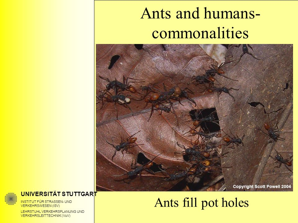 UNIVERSITÄT STUTTGART INSTITUT FÜR STRASSEN- UND VERKEHRSWESEN (ISV) LEHRSTUHL VERKEHRSPLANUNG UND VERKEHRSLEITTECHNIK (VuV) Ants fill pot holes Ants and humans- commonalities
