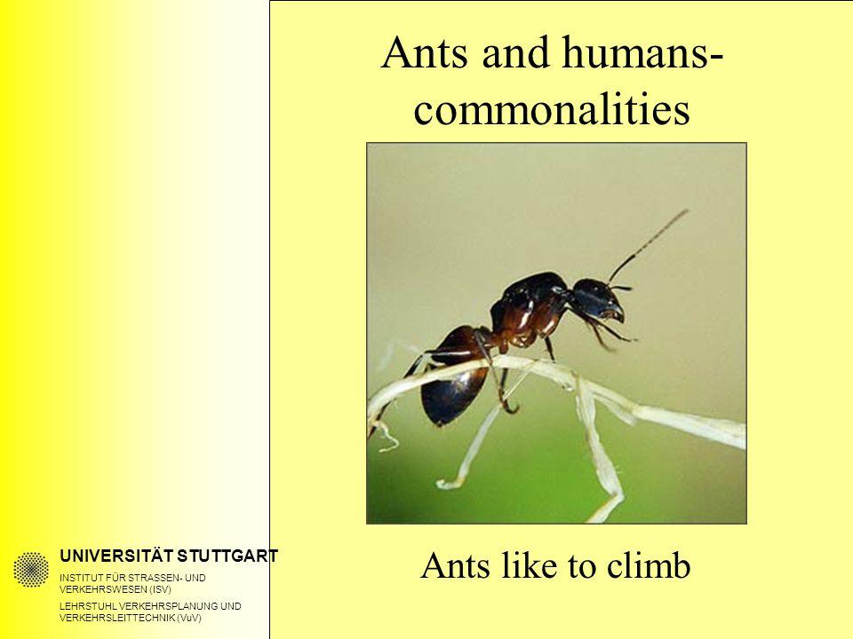 UNIVERSITÄT STUTTGART INSTITUT FÜR STRASSEN- UND VERKEHRSWESEN (ISV) LEHRSTUHL VERKEHRSPLANUNG UND VERKEHRSLEITTECHNIK (VuV) Ants and humans- commonalities Ants like to climb