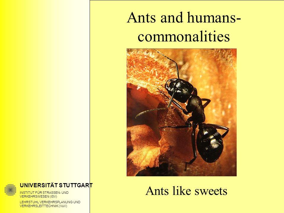 UNIVERSITÄT STUTTGART INSTITUT FÜR STRASSEN- UND VERKEHRSWESEN (ISV) LEHRSTUHL VERKEHRSPLANUNG UND VERKEHRSLEITTECHNIK (VuV) Ants like sweets Ants and humans- commonalities