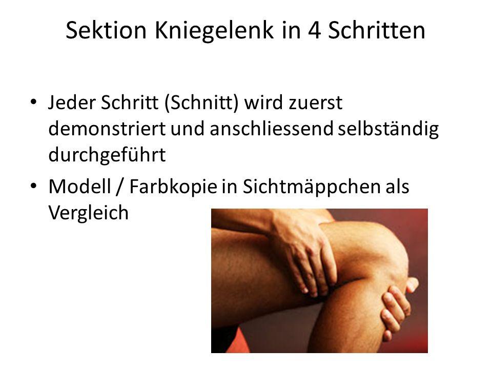 Sektion Kniegelenk in 4 Schritten Jeder Schritt (Schnitt) wird zuerst demonstriert und anschliessend selbständig durchgeführt Modell / Farbkopie in Si