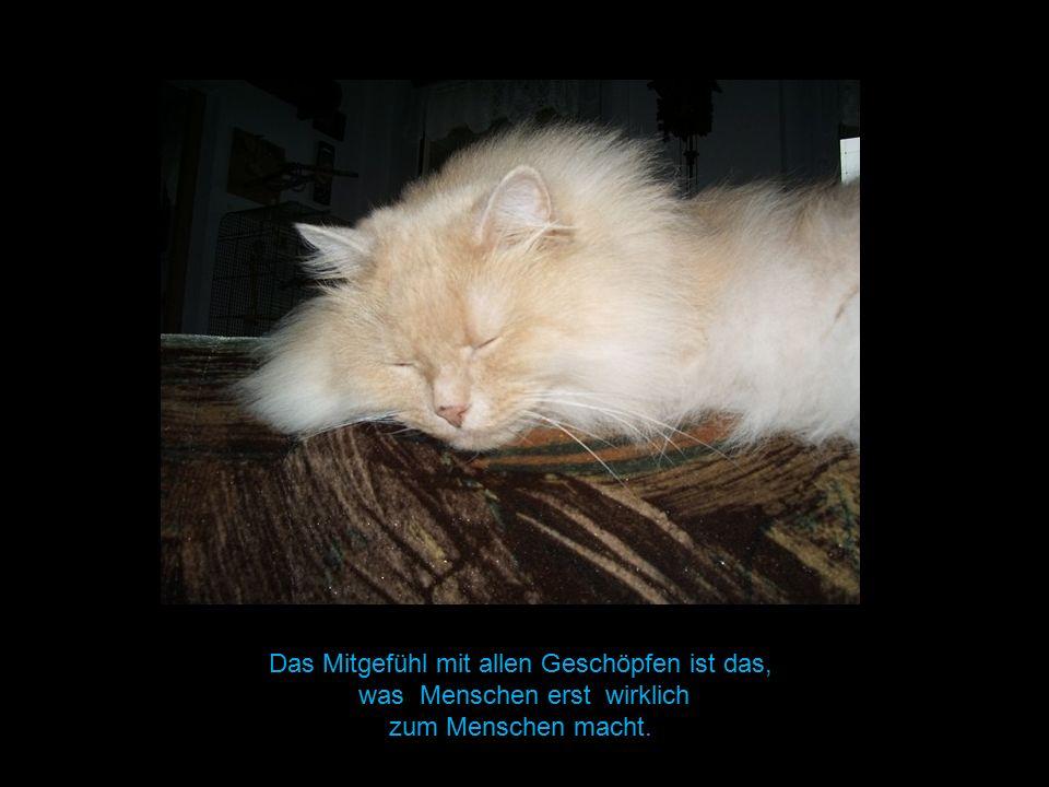 Das Mitgefühl mit allen Geschöpfen ist das, was Menschen erst wirklich zum Menschen macht.