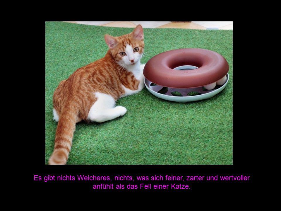 Es gibt nichts Weicheres, nichts, was sich feiner, zarter und wertvoller anfühlt als das Fell einer Katze.