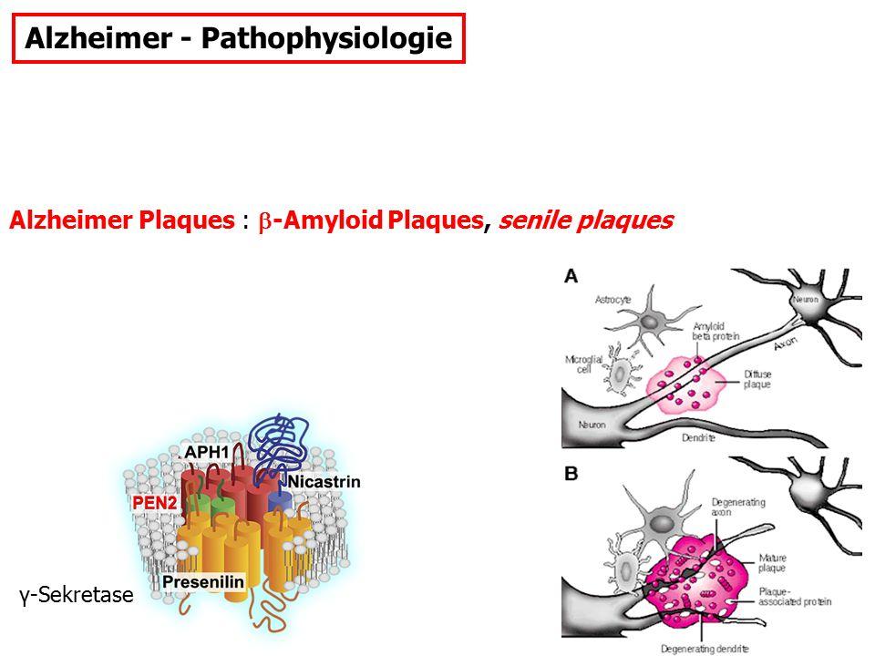 Depression: Entstehungshypothesen: Monoamin-Hypothese: MRI-Evidenz Blut-Parameter Hyperaktive HPA-Achse: