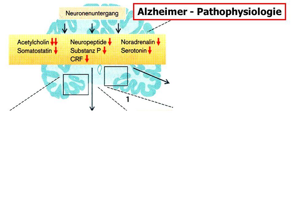 Alzheimer - Morphologie