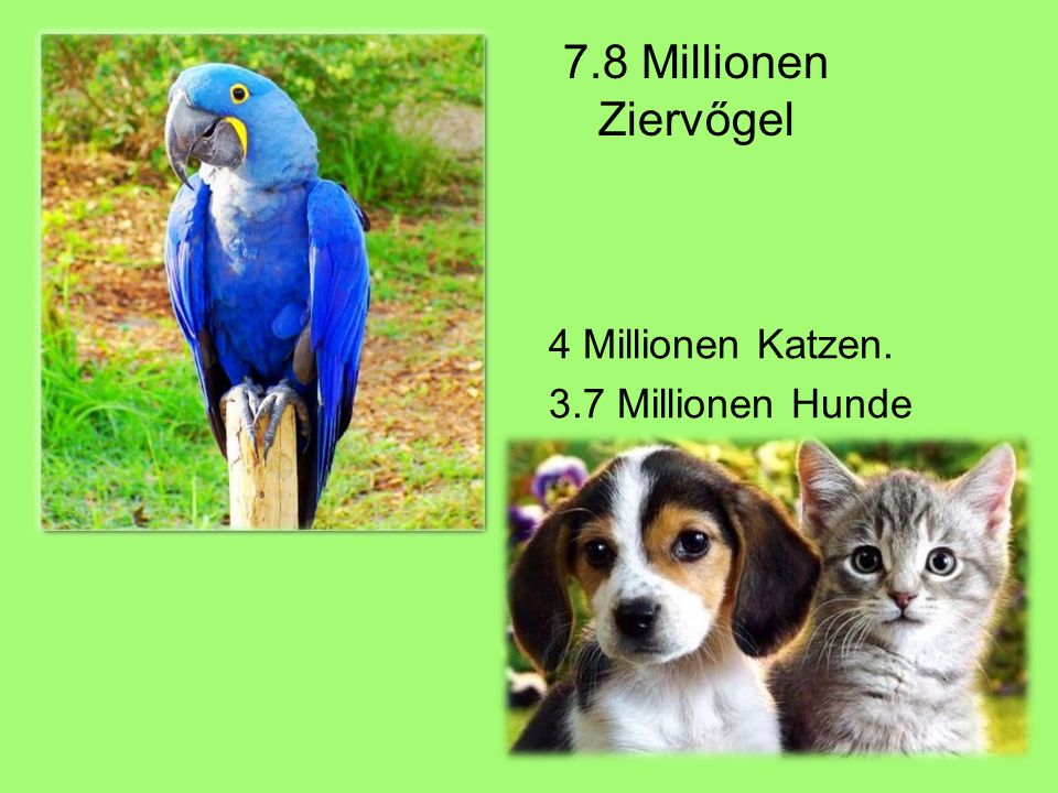 7.8 Millionen Ziervőgel 4 Millionen Katzen. 3.7 Millionen Hunde