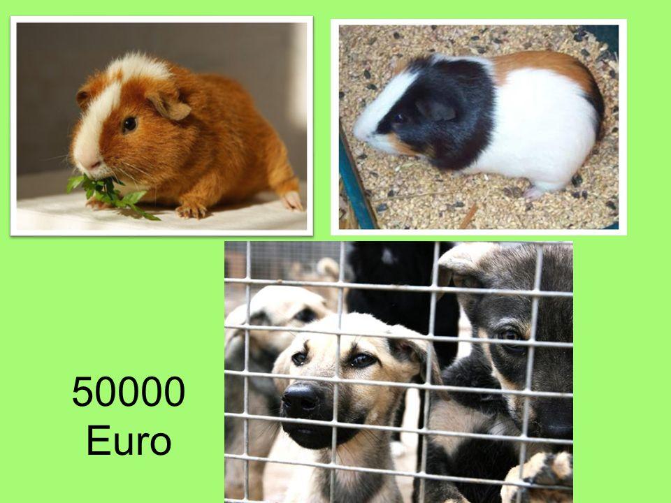 50000 Euro