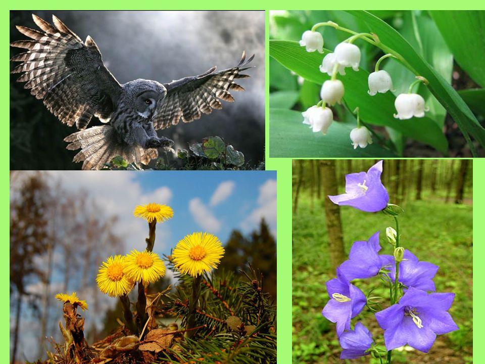 Was wirst du machen, um die Natur zu schützen.