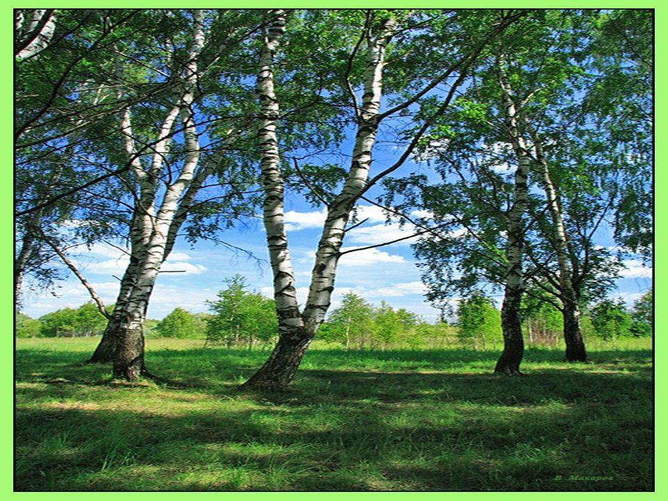 Die Umwelt Wälder Flüsse Seen Pflanzen Meere Vögel Bäume Felder