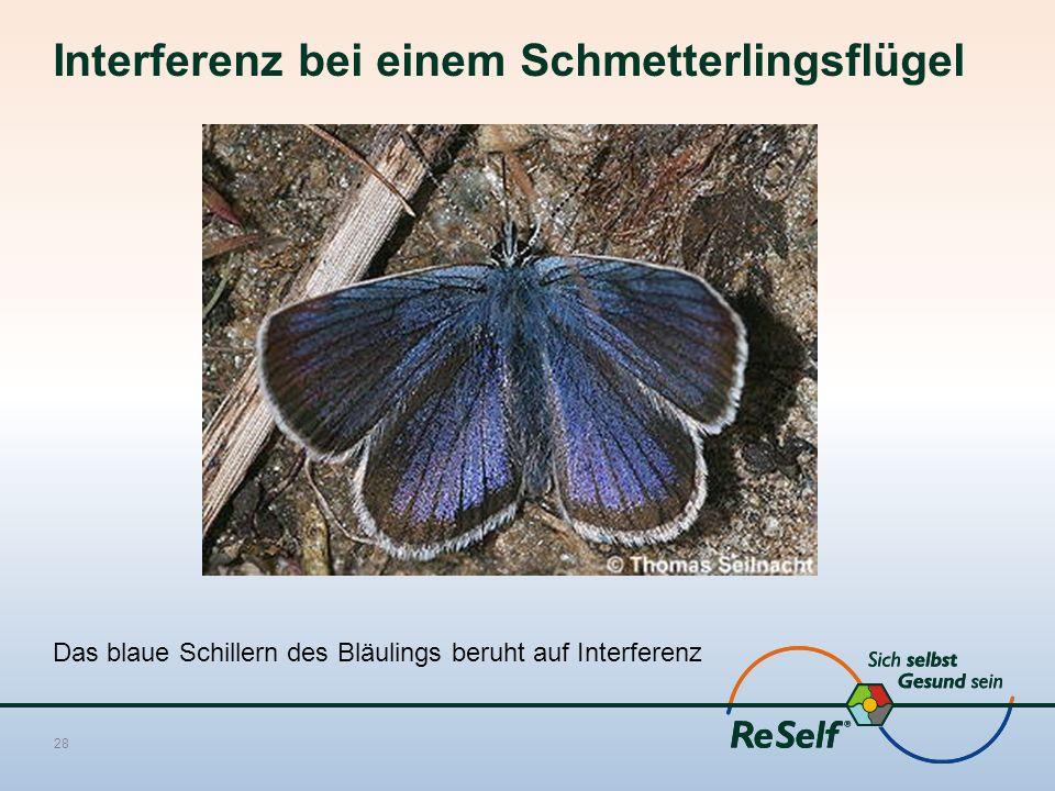 Interferenz bei einem Schmetterlingsflügel Das blaue Schillern des Bläulings beruht auf Interferenz 28