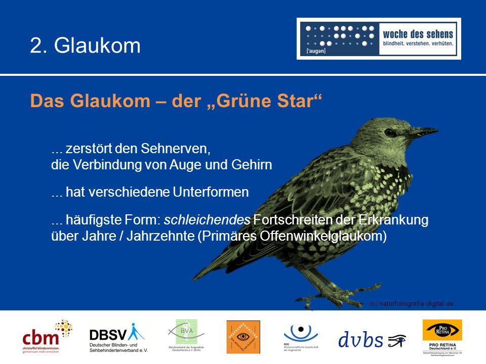"""2.Glaukom Das Glaukom – der """"Grüne Star (c) naturfotografie-digital.de..."""