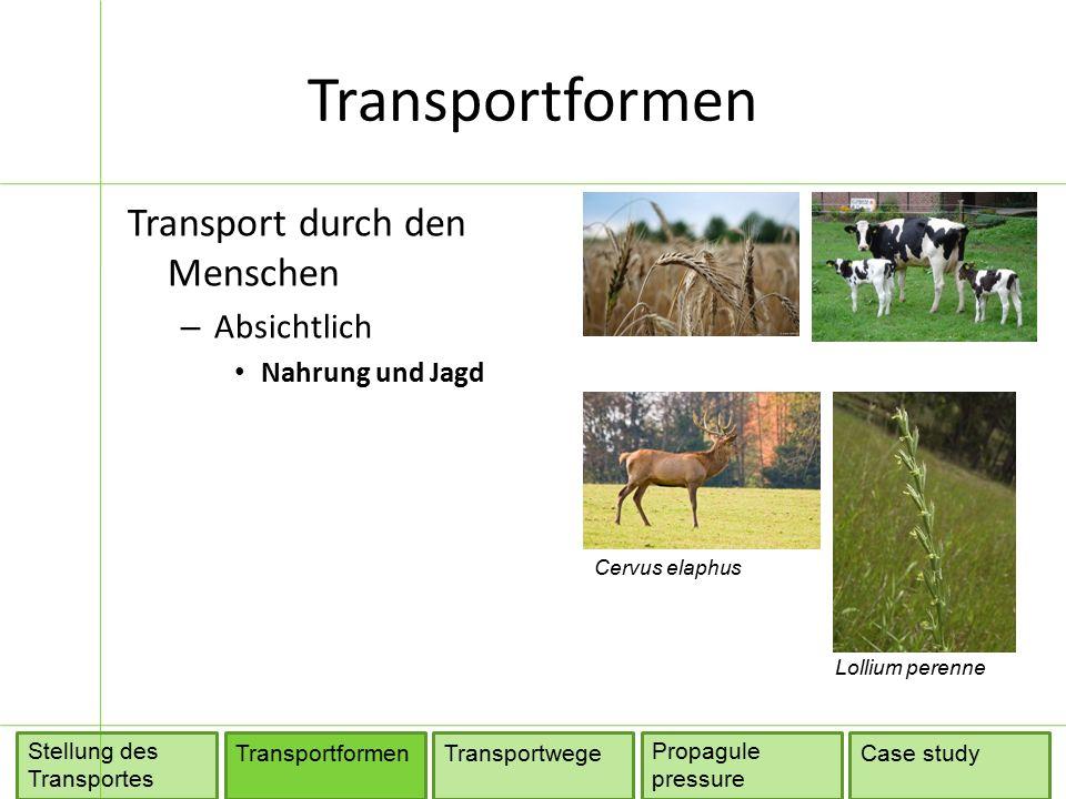 Transportwege TransportformenTransportwege Propagule pressure Stellung des Transportes Case study Quelle: Hulme (2009)