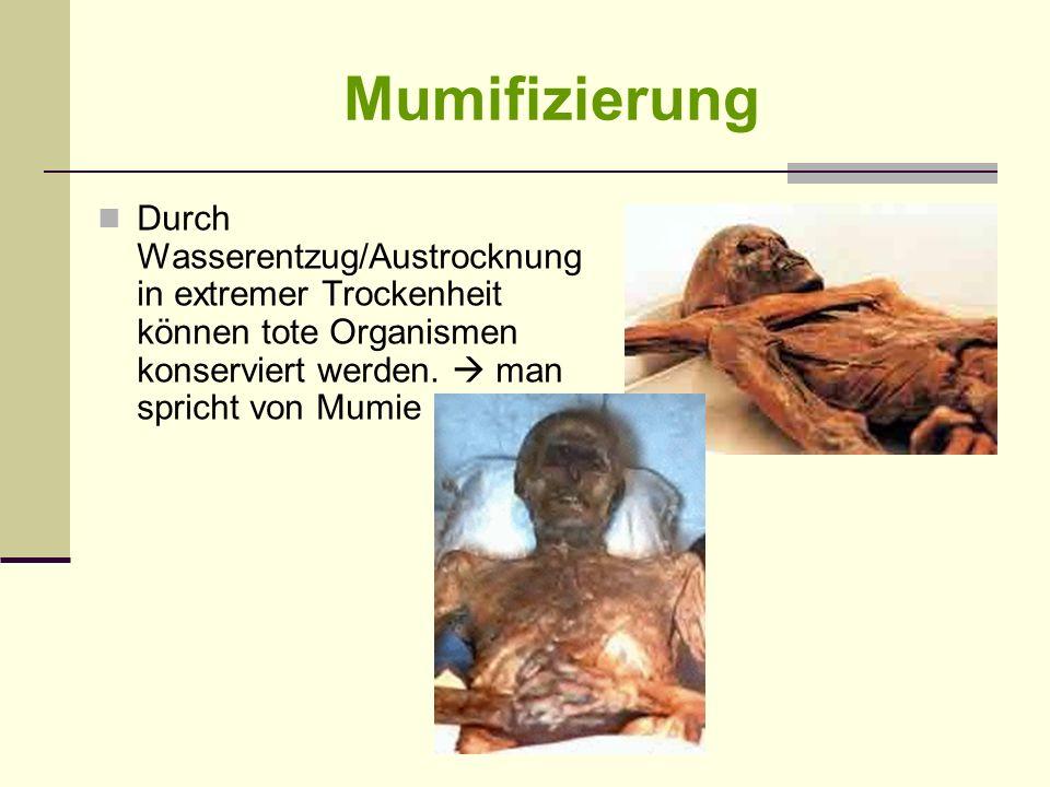 Mumifizierung Durch Wasserentzug/Austrocknung in extremer Trockenheit können tote Organismen konserviert werden.  man spricht von Mumie