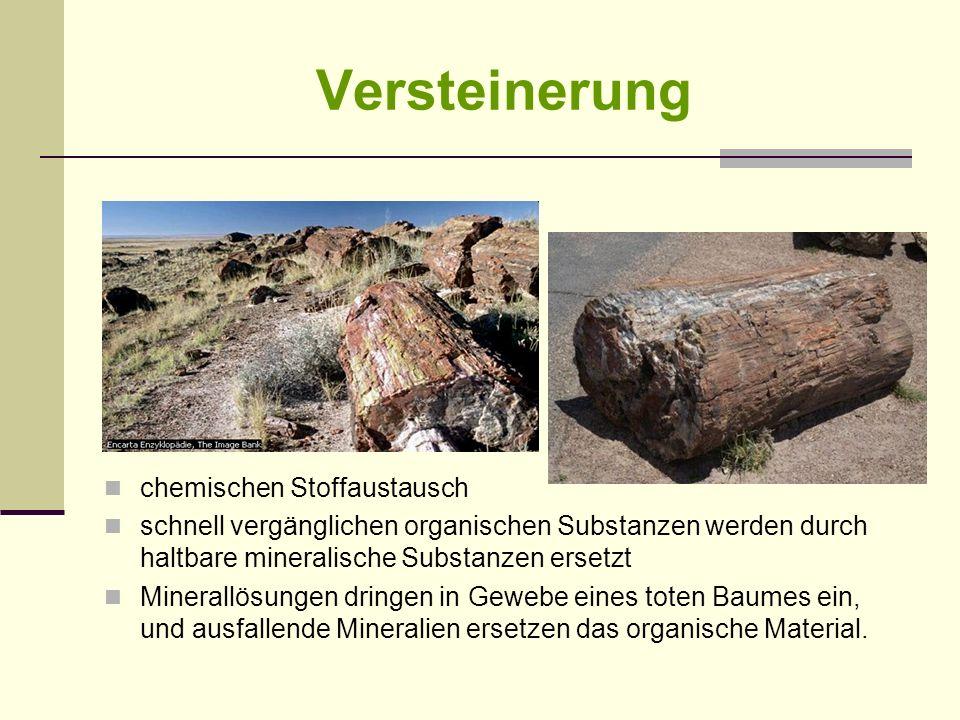 Versteinerung chemischen Stoffaustausch schnell vergänglichen organischen Substanzen werden durch haltbare mineralische Substanzen ersetzt Minerallösu