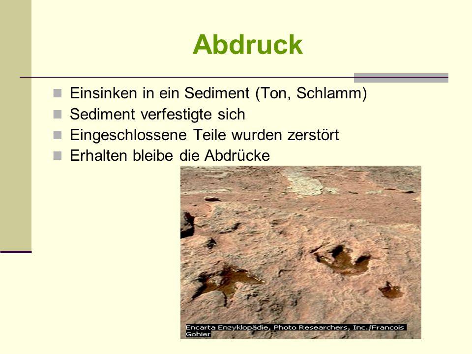 Abdruck Einsinken in ein Sediment (Ton, Schlamm) Sediment verfestigte sich Eingeschlossene Teile wurden zerstört Erhalten bleibe die Abdrücke