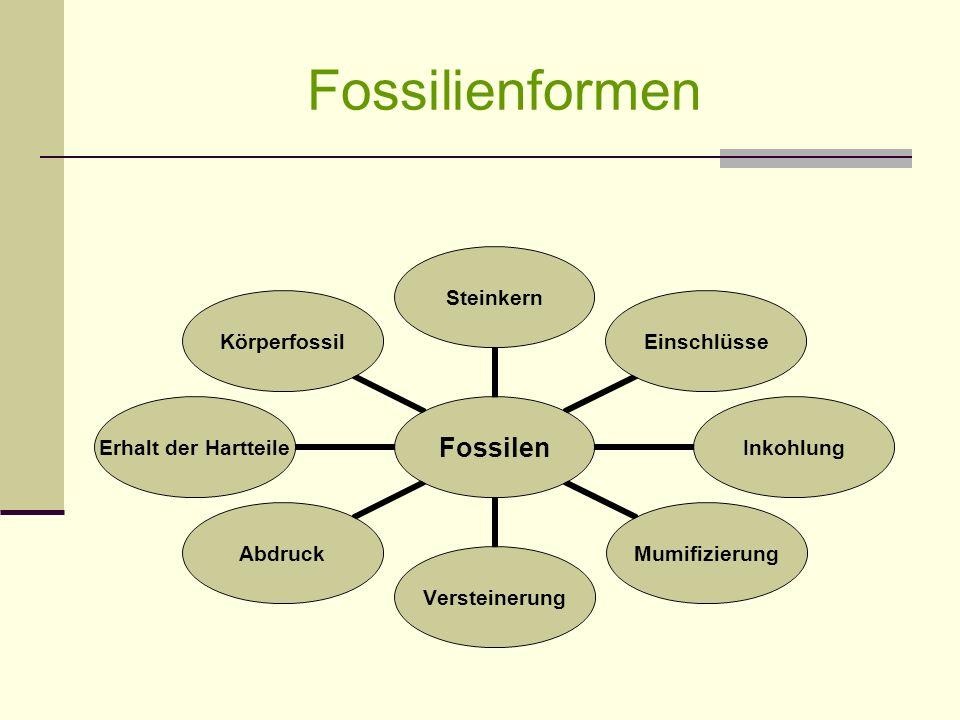 Fossilienformen Fossilen SteinkernEinschlüsseInkohlungMumifizierungVersteinerungAbdruck Erhalt der Hartteile Körperfossil